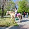 И для взрослых лошадка есть :)