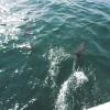 Скадовские дельфины - самые радушные :)
