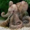Слоновый осьминог