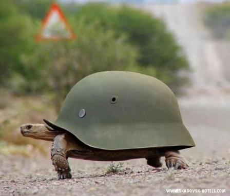 Пляжный патруль