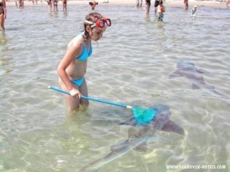 Рыбачка Соня как-то...